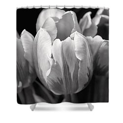 Tulip Flowers Black And White Shower Curtain