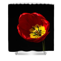 Tulip Glory Shower Curtain by Kenneth Cole