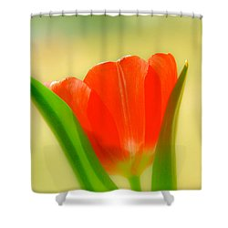 Tulip  Shower Curtain by Menachem Ganon