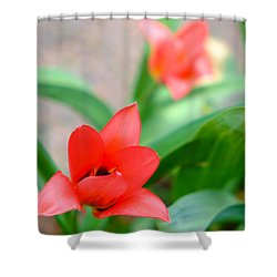 Tulip Of Dream Shower Curtain