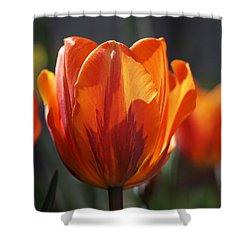 Tulip Prinses Irene Shower Curtain by Rona Black