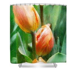 Tulip Quartet Shower Curtain by Francesa Miller
