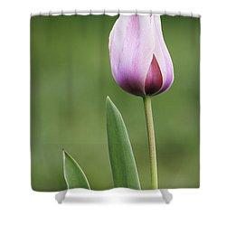 Shower Curtain featuring the photograph Tulip 2 by Ram Vasudev
