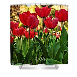 Tulip Time Shower Curtain by Peggy Hughes