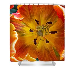 Shower Curtain featuring the photograph Tulip Two by Kate Brown