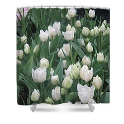 Shower Curtain featuring the photograph Tulip White Show Flower Butterfly Garden by Navin Joshi