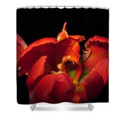 Tulipmelancholy Shower Curtain