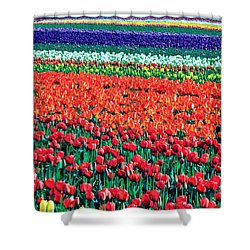 Tulipomania Shower Curtain by Benjamin Yeager