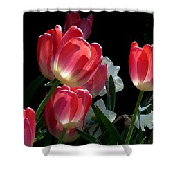 Shower Curtain featuring the photograph Tulips And Daffodils by Lucinda Walter
