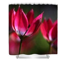 Shower Curtain featuring the photograph Tulips by Annie Snel