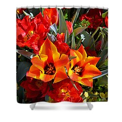Tulips At The Pier Shower Curtain