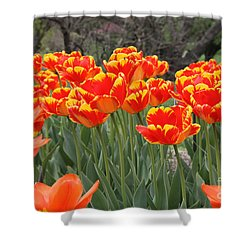 Shower Curtain featuring the photograph Tulips From Brooklyn by John Telfer