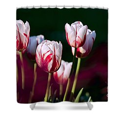 Shower Curtain featuring the photograph Tulips Garden Flowers Color Spring Nature by Paul Fearn