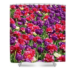 Tulips In A Meadow Shower Curtain