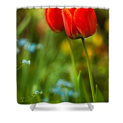 Tulips In Garden Shower Curtain