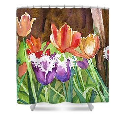 Tulips In Spring Shower Curtain by Yolanda Koh