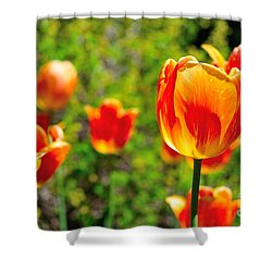 Shower Curtain featuring the photograph Tulips by Joe  Ng