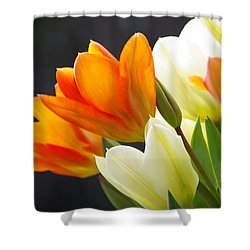 Shower Curtain featuring the photograph Tulips by Marilyn Wilson