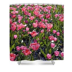 Tulips Shower Curtain by Matthias Hauser