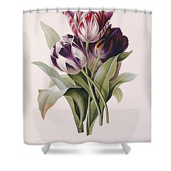 Tulips Shower Curtain by Pierre Joseph Redoute