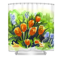 Tulips With Blue Grape Hyacinths Explosion Shower Curtain by Kip DeVore