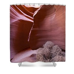 Shower Curtain featuring the photograph Tumbleweed In The Canyon by Bryan Keil