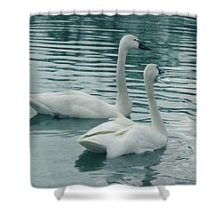 Tundra Swans Shower Curtain by Kathleen Struckle