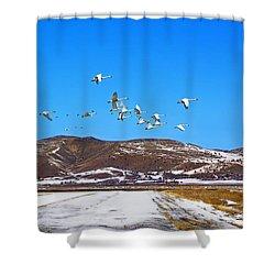 Tundra Swans Take Flight  Shower Curtain