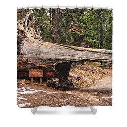 Tunnel Log Shower Curtain by Muhie Kanawati