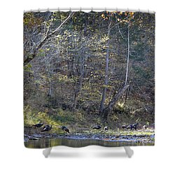 Turkey Crossing At Big Hollow Shower Curtain by Michael Dougherty