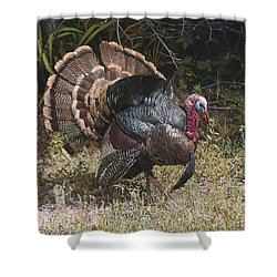 Turkey In The Weeds Shower Curtain by Joshua Martin