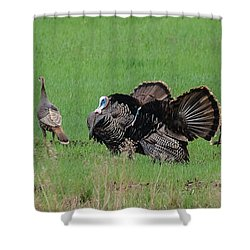 Turkey Mating Ritual Shower Curtain by Cheryl Baxter