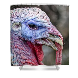Turkey Shower Curtain by Rick Mosher