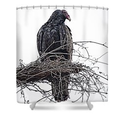 Turkey Vulture Shower Curtain by Douglas Barnard