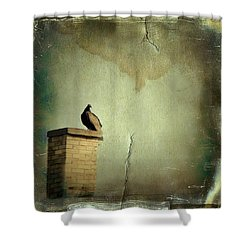 Turkey Vulture Shower Curtain by Gothicrow Images