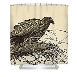 Turkey Vulture V2 Shower Curtain by Douglas Barnard