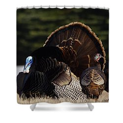Turkey's Shower Curtain