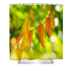 Turning Autumn Shower Curtain by Aaron Aldrich