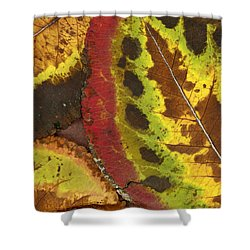 Turning Leaves 3 Shower Curtain by Stephen Anderson