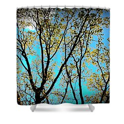Turquoise Sky Vivid Tree Shower Curtain