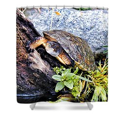 Shower Curtain featuring the photograph Turtle 1 by Dawn Eshelman
