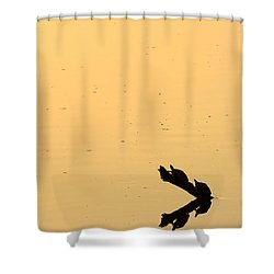 Turtle Art Shower Curtain by Fotosas Photography