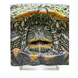 Turtle Covered With Duckweed Shower Curtain