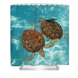 Turtle Dance Shower Curtain by Irina Davis