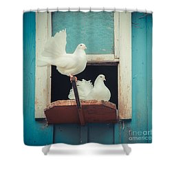Turtle Doves 1x1 Shower Curtain by Hannes Cmarits