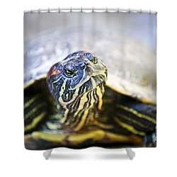 Turtle Shower Curtain by Elena Elisseeva