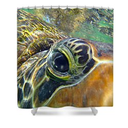 Turtle Eye Shower Curtain by Carey Chen