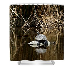 Turtle On Turtle Shower Curtain by Ernie Echols