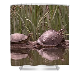 Turtle Struggling To Rest On A Log With Its Buddy Shower Curtain by Jeff Swan