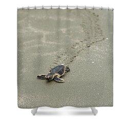 Turtle Tracks Shower Curtain